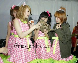 ryn chibi lampion global11