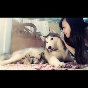 yuki anjing dari Ryn Chibi (4)